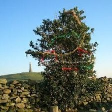Wild About Trees in Ulverston?